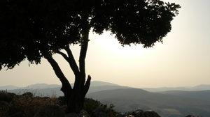 Israel Tree