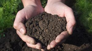 Handful of dirt