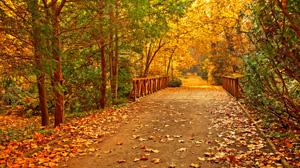 autumn-scene